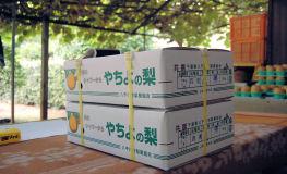 200814-7.tenpo.jpg